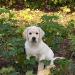 Pup in garden